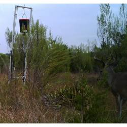 How to build your own deer feeder