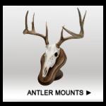 Antler Mounts-