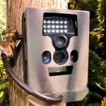 Bear Box for Wildgame Cloak Game Cameras