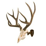 Skull Hooker Little Hooker Antler Mounting System - Robust Brown